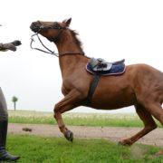 Grön robot kan ge hästen panik
